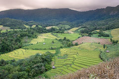 Rice terraces. During sunset in Chaing Mai , Thailand Stock Photo