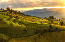 Rice terraces on sunset Royalty Free Stock Image