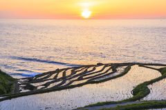 Rice terraces at sunset Stock Images