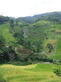 Rice terraces of Tana Toraja in Sulawesi Royalty Free Stock Photos
