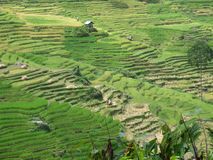 Rice terraces of Tana Toraja in Sulawesi Stock Photos