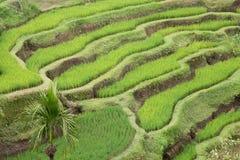 Rice Terraces. At Tegalalang, Bali Island, Indonesia Royalty Free Stock Photo