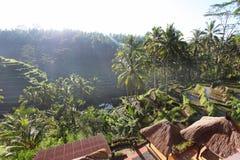 Rice terraces in Tegallalang, Bali, Indonesia Stock Photos