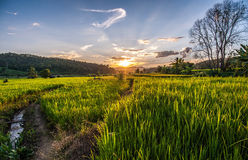 Rice Terraces in thailand Royalty Free Stock Photography
