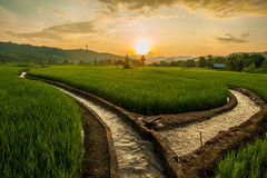 Rice Terraces in thailand Stock Photography