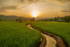 Rice Terraces in thailand Stock Images