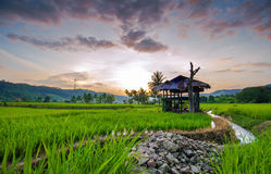 Rice Terraces in thailand Royalty Free Stock Images