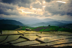 Rice Terraces in thailand. Rice fields on terraced in rainny season at Chiang Mai Stock Images