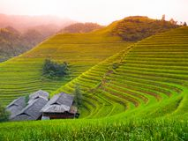 Rice terraces and traditional village Stock Photography