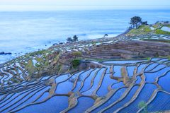Rice terraces at twilight Stock Images