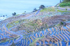 Rice terraces at twilight Royalty Free Stock Images