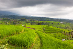 Rice terraces under the clouds. Bali, Indonesia Royalty Free Stock Image