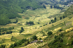 Rice Terraces in a valley. This photo is from Sapa, Vietnam.  The terraces are used to grow rice.  The golden colour shows that it's harvest time Royalty Free Stock Image