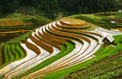 Rice terraces in Vietnam. This photo was taken in June at Mu Cang Chai, Yen Bai, Northwest of Vietnam. This region is considered one of the most important Stock Photo