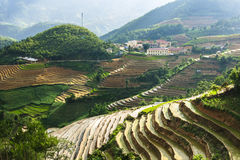 Rice Terraces in Vietnam Stock Photography