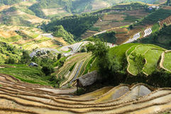Rice Terraces in Vietnam. This photo was taken in June at Northwest of Vietnam. This region is considered one of the most important granaries of the country and Royalty Free Stock Photos