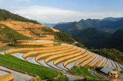 Rice Terraces in Vietnam Royalty Free Stock Photo