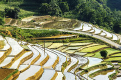 Rice Terraces in Vietnam Stock Images
