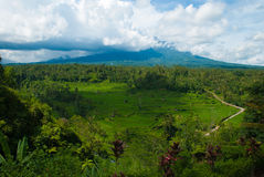 Rice terraces on the volcano Agung. Royalty Free Stock Photo