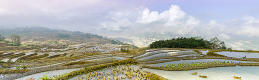 Rice terraces in Xinjie village Stock Photo