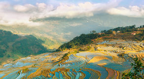 Rice terraces in Xinjie village - 3 Stock Photography