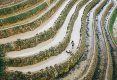Rice terraces, Yaoshan Mountain, Guilin, China. Worker on rice paddy terrace on Yaoshan Mountain, Guilin, China stock photography