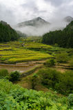 Rice terraces of Youtsuya village, Japan Royalty Free Stock Photo
