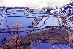 Rice terraces of yuanyang. Ancient rice terraces of yuanyang, yunnan, china Stock Photo
