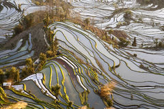 Rice Terraces of Yuanyang. Terraced rice fields layer the mountain sides of Yuanyang county in southern Yunnan province in China Royalty Free Stock Images
