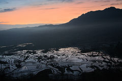 Rice terraces of yuanyang Stock Photography