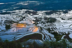 Rice terraces of yuanyang Stock Photos