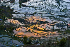 Rice terraces of yuanyang Stock Photo