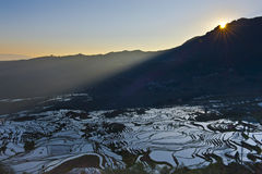Rice terraces of yuanyang Stock Image