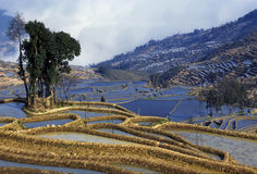 Rice terraces of yuanyang Royalty Free Stock Image