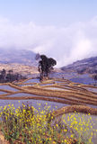 Rice terraces of yuanyang Royalty Free Stock Photography