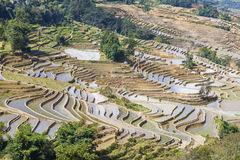 Rice terraces in Yuanyang, China Stock Photography