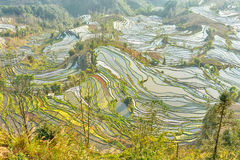 Rice Terraces in Yuanyang district Stock Images