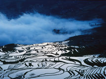Rice terraces of yuanyang in the morning Royalty Free Stock Images