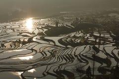 Rice terraces of yuanyang Royalty Free Stock Photos