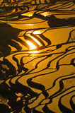 Rice terraces of yuanyang,  yunnan, china Stock Images