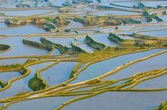 Rice terraces of yuanyang, yunnan, china royalty free stock image