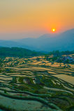 Rice terraces of yuanyang,  yunnan, china Royalty Free Stock Image