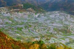 Rice terraces of yuanyang, yunnan, china Royalty Free Stock Photo