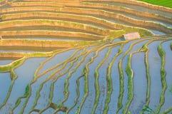 Rice terraces of yuanyang,  yunnan, china Royalty Free Stock Photos