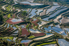 Rice terraces of Yuanyang, Yunnan, China Stock Image