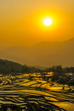 Rice terraces of Yuanyang, Yunnan, China Royalty Free Stock Images