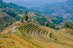 Rice terraces of Yuanyang, Yunnan, China Royalty Free Stock Photo