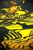 Rice terraces of Yuanyang, Yunnan, China Royalty Free Stock Images
