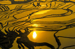 Rice terraces of Yuanyang, Yunnan, China. Panorama of rice terraces of Yuanyang, Yunnan, China Stock Images