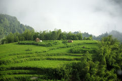 Rice Terraces of Yunhe County China Royalty Free Stock Photos